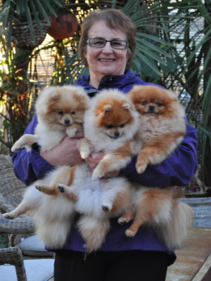 Denise Leo and the Dochlaggie Pomeranians