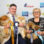 Pomeranian Melbourne Royal 2018