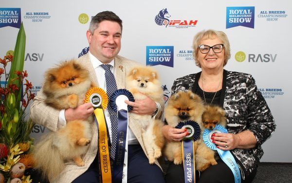 A look at 2018 for Dochlaggie Pomeranians