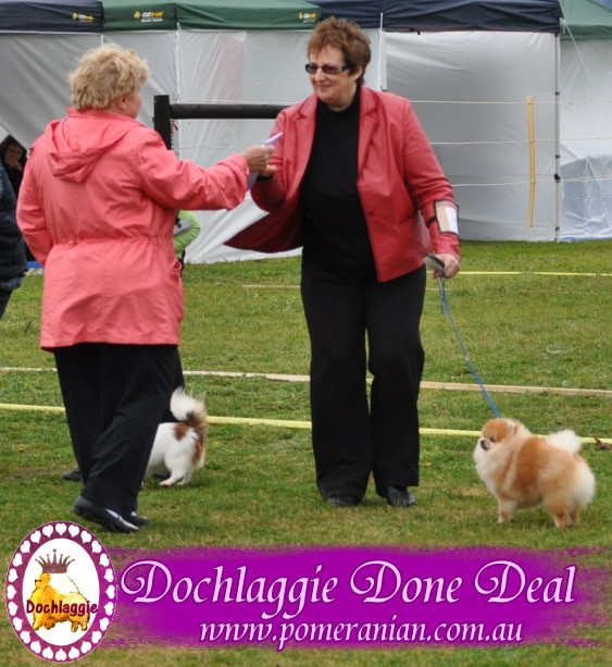 Dochlaggie Done Deal wins another Best os Breed and Best Minor Puppy in Group award