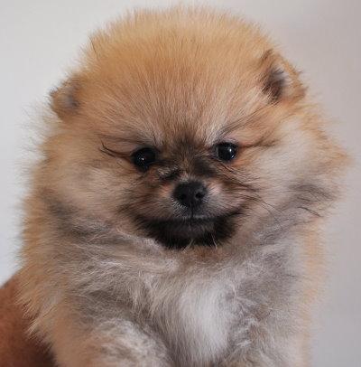 Dochlaggie puppy