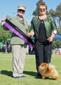 Rebel winning Best Exhibit In Group at Shepparton Show.
