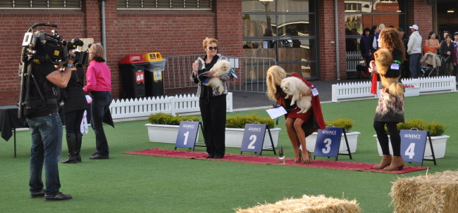 Denise Leo & the Dochlaggie Pomeranians appeared on the Real Housewives of Melbourne