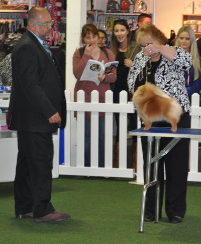 Champion Dochlaggie Double Delite winning Reserve Challenge at the Royal Melbourne Show 2015