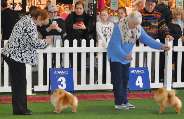 Ch Dochlaggie Double Delite & Dochlaggie Diamond Magic winning Challenge and Reserve Challenge bitch winning at the Royal Melbourne Show 2015