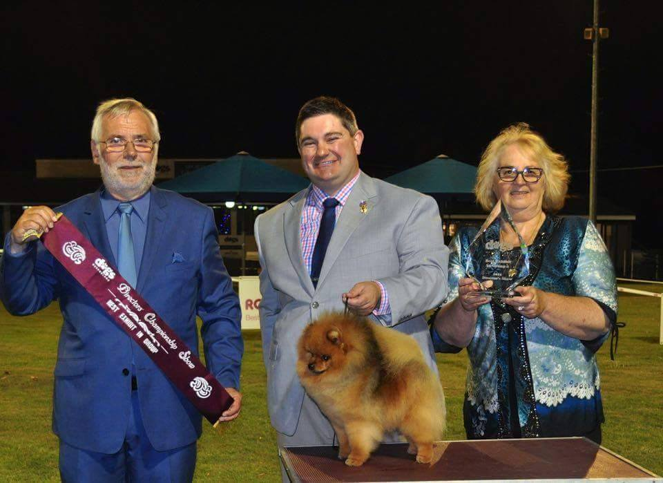 Rebel,Supreme Australian champion and Canadian Champion Shallany's Rebel With A Cause imported Canada, visits, Brisbane