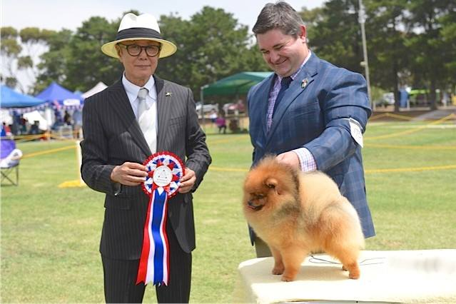 Australia, Day, Show, Rebel, wins, R/U, BEST IN SHOW, BEST IN SHOW 2nd, Mr T Itamoto, Japan