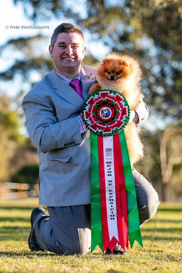 Rebel the Pomeranian handled by Jrarrod Tyler wins BEST IN SHOW All Breeds at Sydney Kennel Club