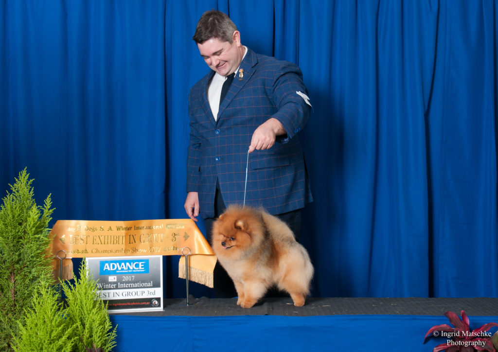 Love this photo of Rebel and Jarrod Tyler. Can Ch. & Australian Supreme Champion Shallany's Rebel With A Cause (imported Can.) winning BEST EXHIBIT IN GROUP 3 under Breeder/Judge & Ex Professional Handler Carol Graham (Canada) of Crystalton Poodle & Pomeranian Fame at Adelaide's Premier Weekend the Winter International .