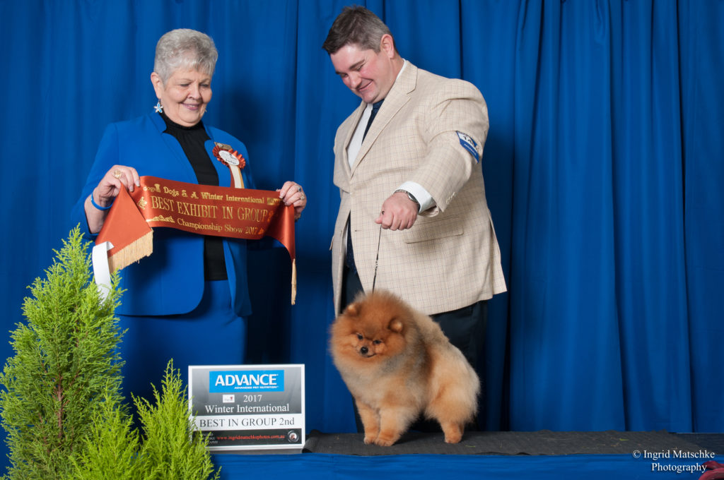 Love this photo of Rebel and Jarrod Tyler. Can Ch. & Australian Supreme Champion Shallany's Rebel With A Cause (imported Can.) winning BEST EXHIBIT IN GROUP 2 under Breeder/Judge & Ex Professional Handler Carol Graham (Canada) of Crystalton Poodle & Pomeranian Fame at Adelaide's Premier Weekend the Winter International .