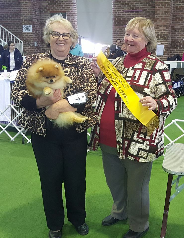 Dochlaggie Deagol The Hobbit wins BEST INTERMEDIATE IN.GROUP AND BEST OF BREED.