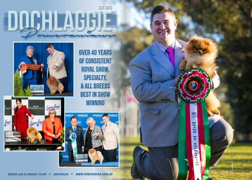 Dochlaggie's advert in THE CANINE STANDARD