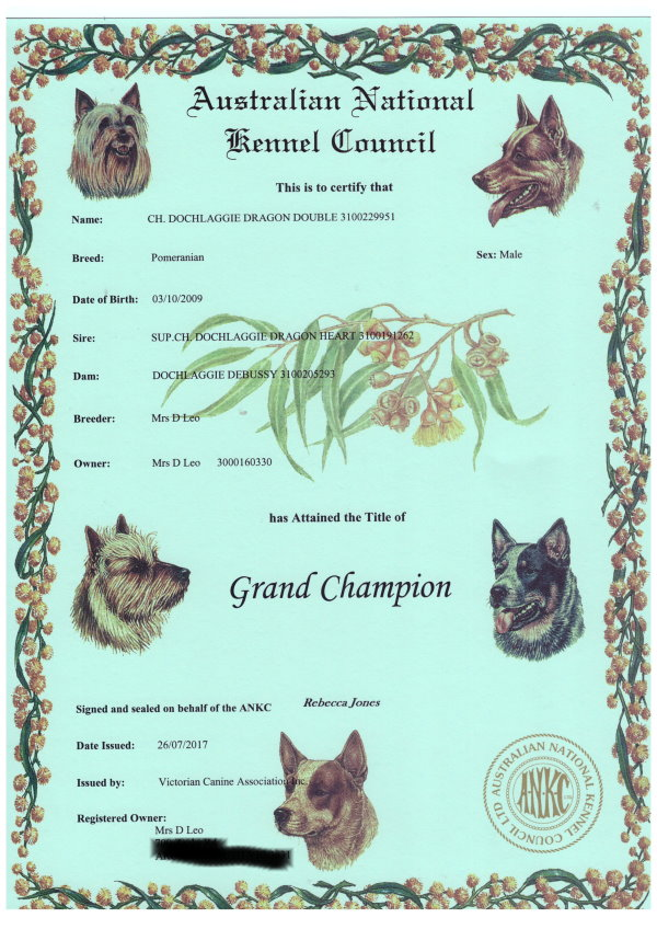Thrilled it is now official. Received Benny's ( SUPREME CHAMPION DOCHLAGGIE DRAGON DOUBLE )Supreme & Grand Champion Certificiates from Dogs Victoria at long last.