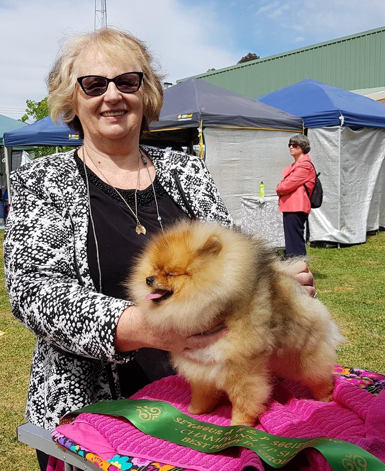 About Dochlaggie Pomeranians Australia