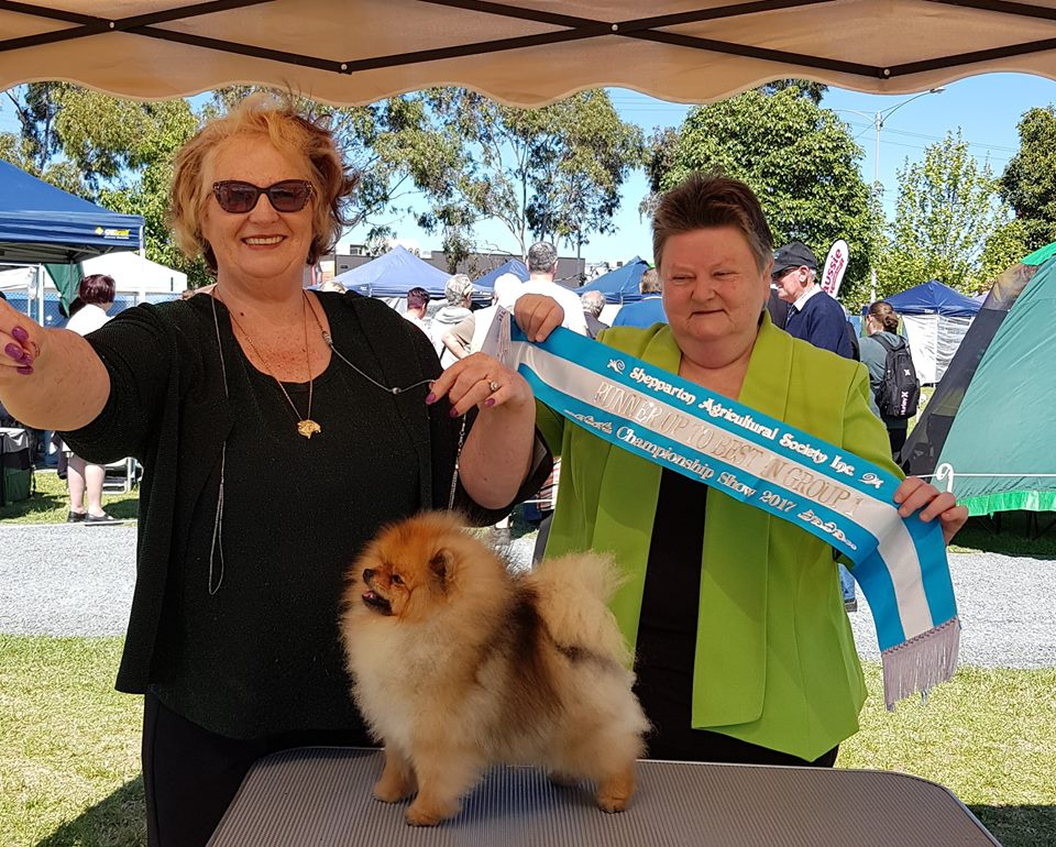 Pomeranian Results from Shepparton Agricultural Show, 2017