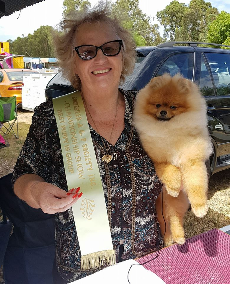Rochester Agricultural Show, show, 2018. Fletcher, Dochlaggie Dont Stop Believing, wins, Best of Breed, BEST PUPPY IN GROUP