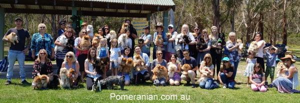Melbourne Pomeranian Picnic News.