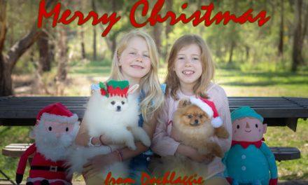 Merry Christmas from Dochlaggie Pomeranians