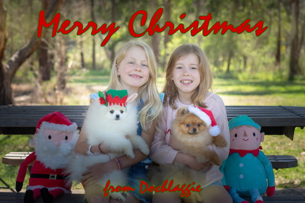 Merry Christmas from Dochlaggie Pomeranians