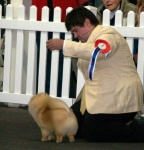 Australian Multi BISA Supreme Champion Dochlaggie Dragon Heart winning his first Royal Best in Show 4th award