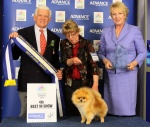 Australian Multi BISA Supreme Champion Dochlaggie Dragon Heart winning his SECOND Royal Best in Show 4th award