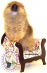 Australian Multi BISA, BISS Supreme Champion Dochlaggie Desoto pictured here as a puppy