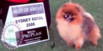 Australian Multi BISA, BISS Supreme Champion Dochlaggie Desoto winning Best of Breed at Sydney Royal Show