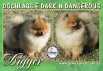 Australian Champion Dochlaggie Dark N Dangerous